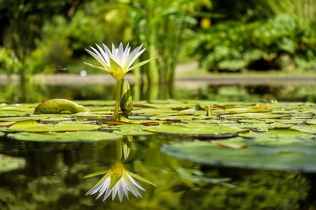 Controlling Algae in Your Water Garden